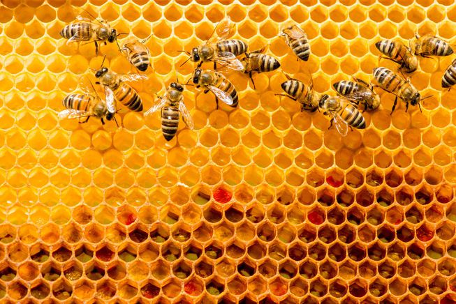 Respect the Bees